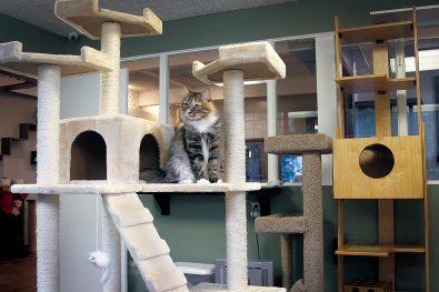 Animal Care - Cateau Marmont