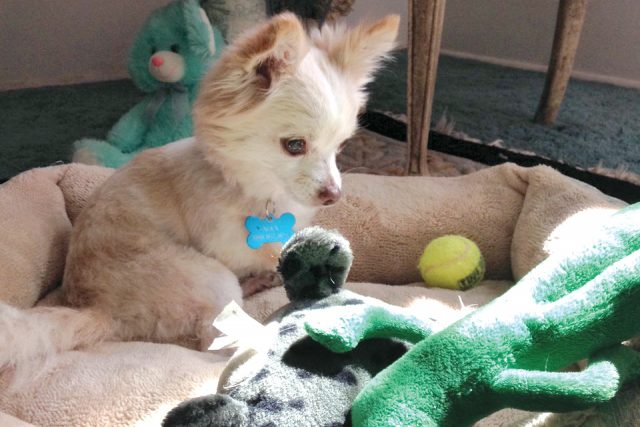 Featured Pet: Maxx