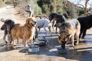 Laurel Canyon Dog Park