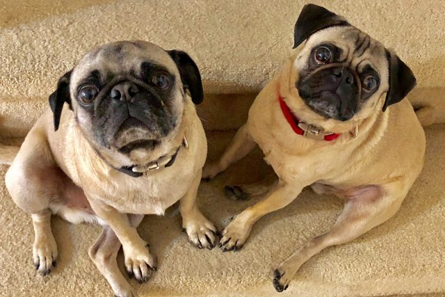 Featured Pets: Guapo and Kuki