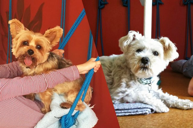 Featured Pets: Lulu and Max