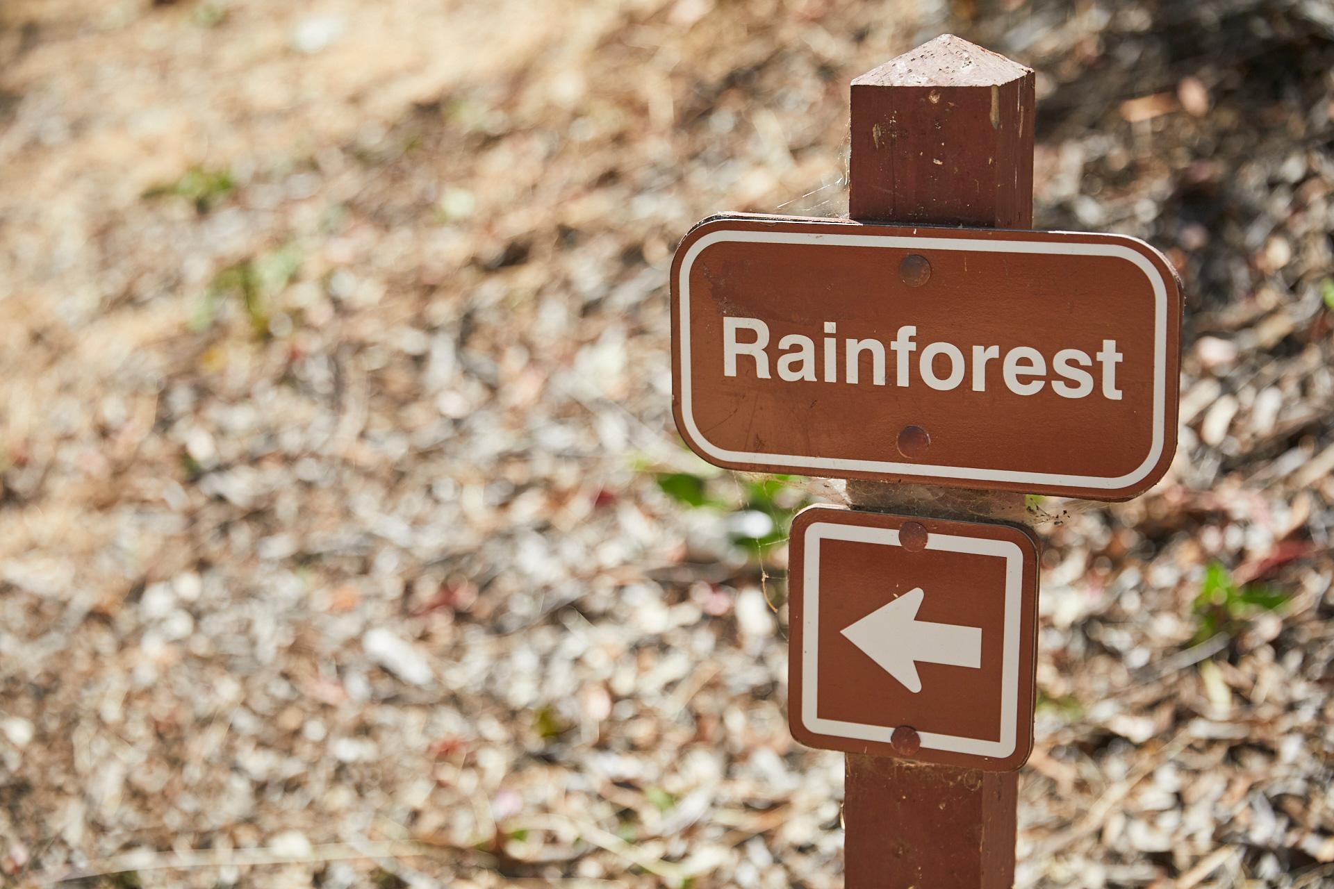 RainforestTrail2