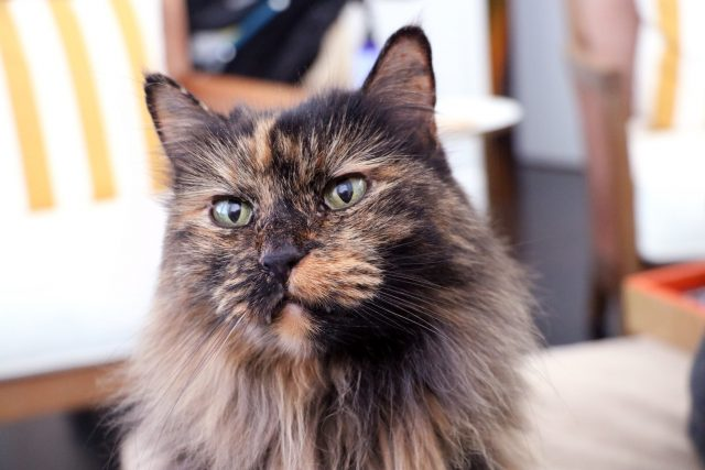 Featured Pet: Minke Pizzicato