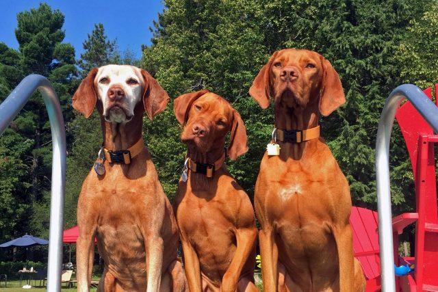 Featured Pets: Kichai, Koa & Choctaw
