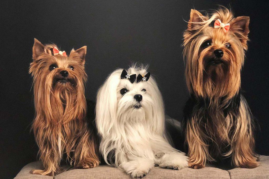 Penelope, Theocritus & Valentina