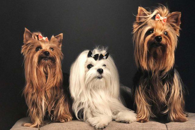 Featured Pets: Penelope, Theocritus & Valentina