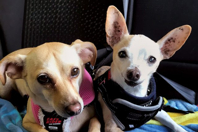 Featured Pets: Banana & Boo