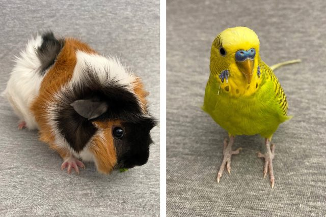 Featured Pets: Squeaky & Chloe