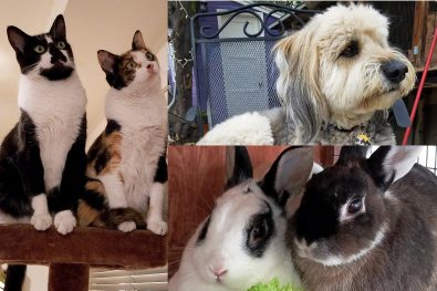 Featured Pets: Ollie, Figgie, Newton, Callie & Checkers